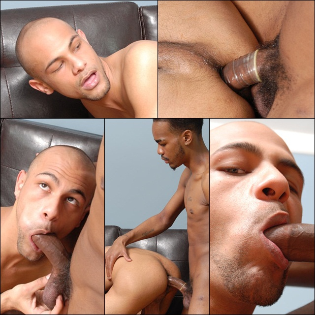 Black Studs fucking and sucking